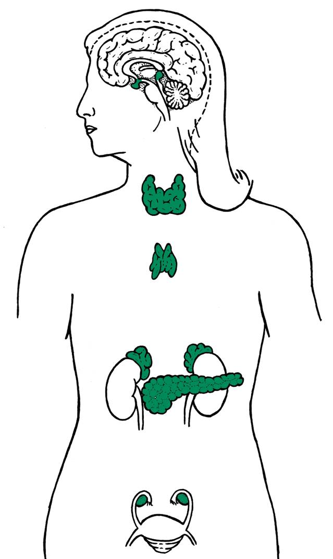 Healing Haven under Hilarion: Wisdom-Endocrine System