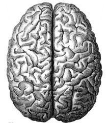 Cerebralhem