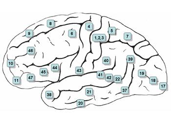 12 Cerebral Centers/Thrones - 1